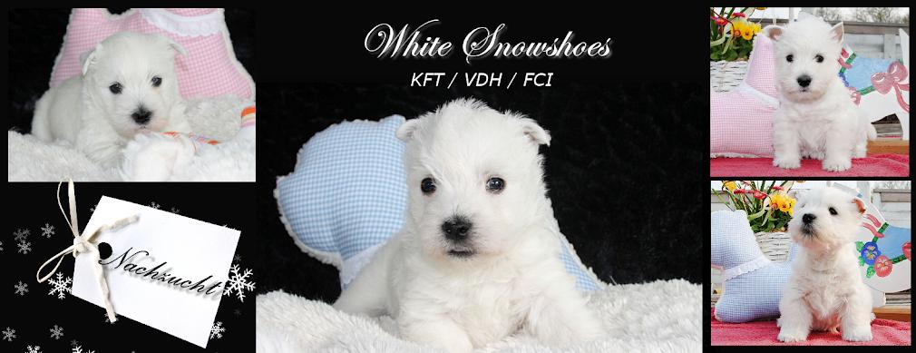 White Snowshoes - Nachzucht