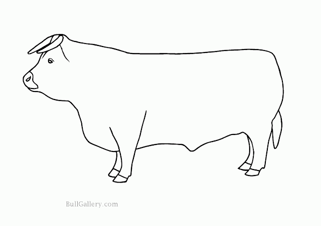 Animals Bulls Free Coloring Page