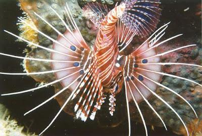 7 Hewan Laut Paling Bahaya Di Dunia [ www.BlogApaAja.com ]