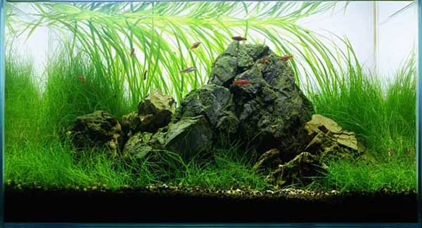 Best Aquascape The No 2 Hobby In The World