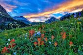 Yankee Boy Basin Wildflowers (Colorado) by Lars Leber
