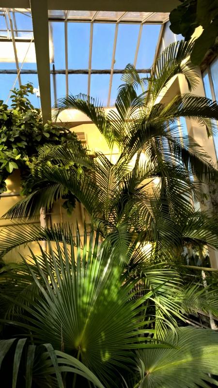 Patouillage et patouillis le jardin botanique for Jardin botanique ouverture 2015