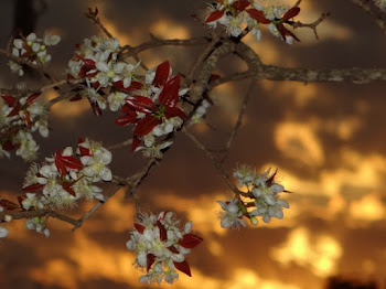 Flor Cagaita