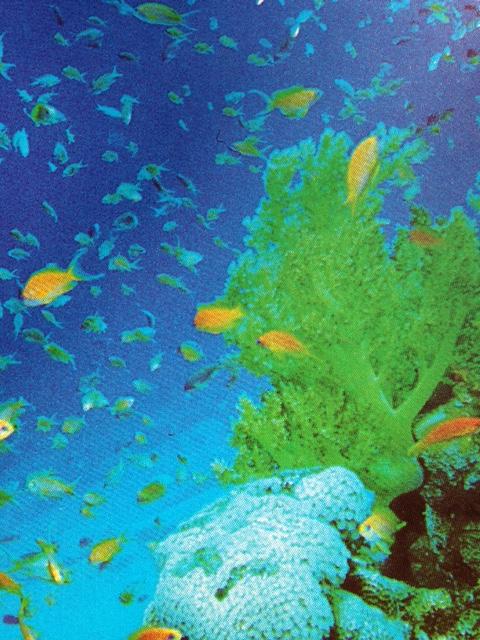 Benessere natural mente alghe contenuti e utilizzo in cucina - Alghe in cucina ...