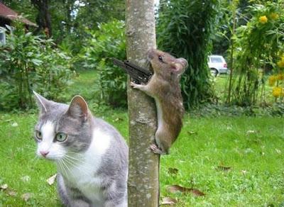 macska egér képek