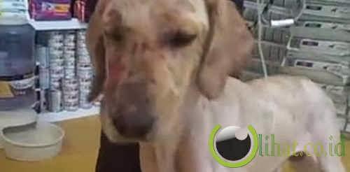 Seekor anjing yang menyelamatkan seorang anak saat kebakaran di Meksiko