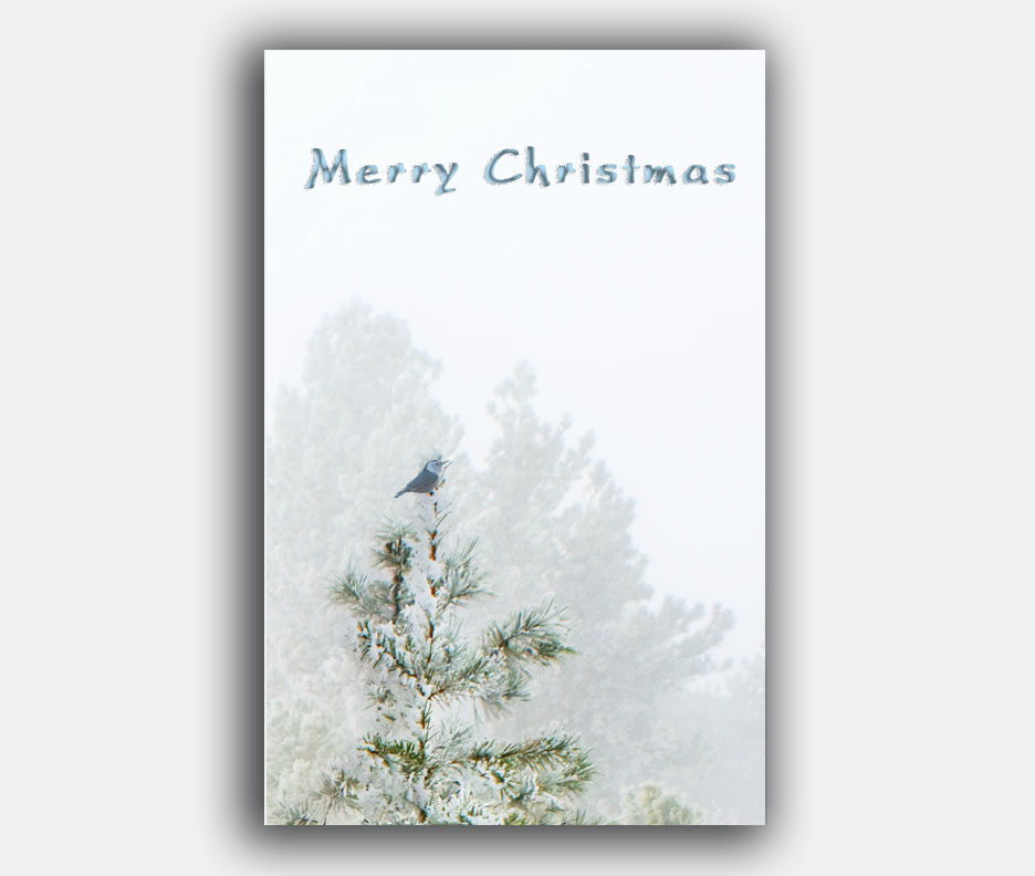 https://www.etsy.com/listing/167499157/bird-christmas-card-free-shipping?ref=shop_home_active