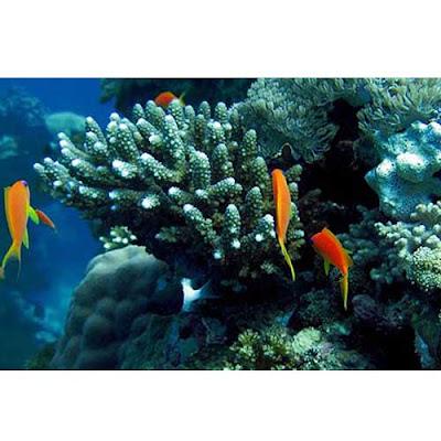 konkan scuba diving