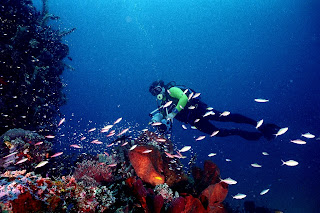 Visitindonesia; The Best Snorkeling As Well As Diving Spots Inwards Indonesia