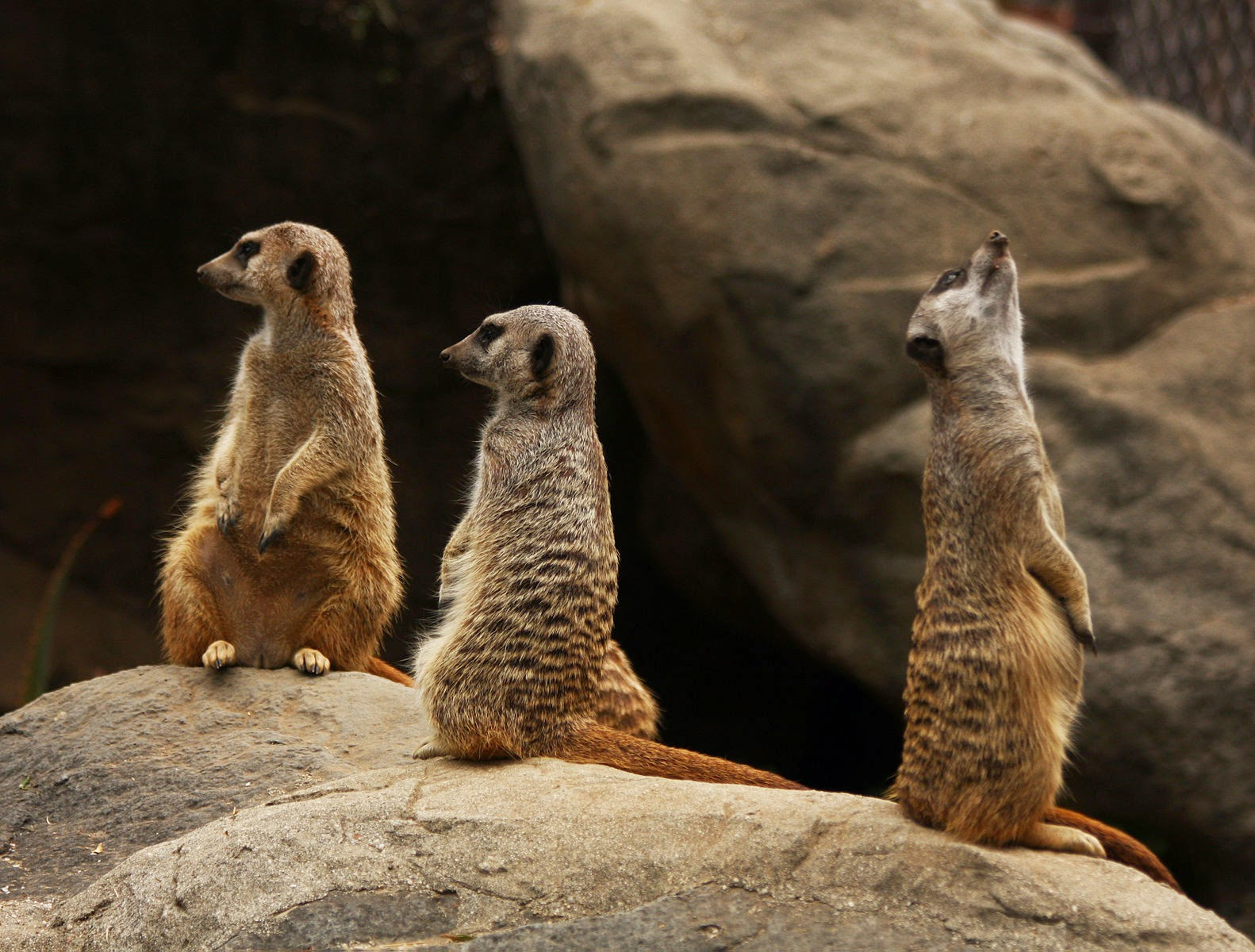 http://upload.wikimedia.org/wikipedia/commons/5/57/Photograph_of_a_Meerkat_Family_%283848828176%29.jpg