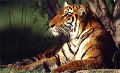 Wild Life Tourism