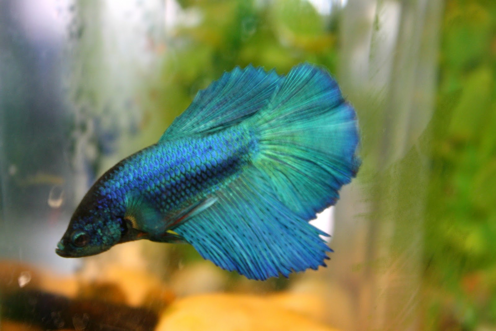 Tails to tell betta think of a name for Beta fish names