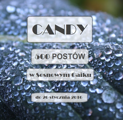 "candy w "" SOSNOWY GAIK"""