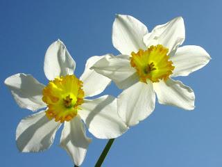 Cvijeće slike besplatne pozadine za desktop download