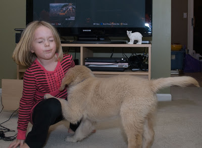 The blond five-year-old is sqatting with eyes closed, her right hand reaching for the floor for balance. The 10-week-old Golden Retriver puppy has one front paw on her knee. He might have just given her a puppy lick!