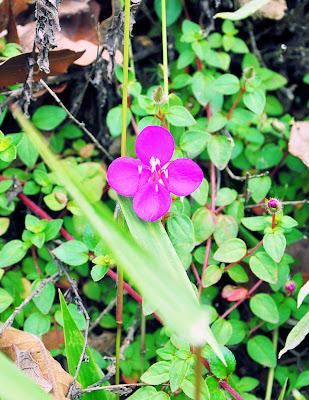 Flores bonitas del campo (Pequeña, pero hermosa)