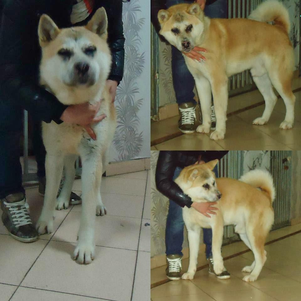 Animal Rescue Albania