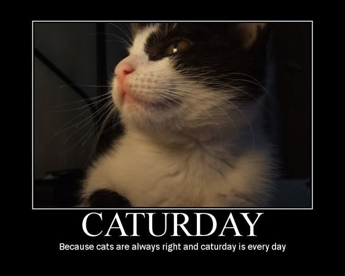 Caturday Memes widescreen wallpaper