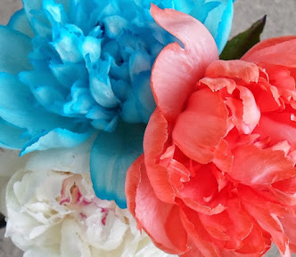 dying peonies with food coloring