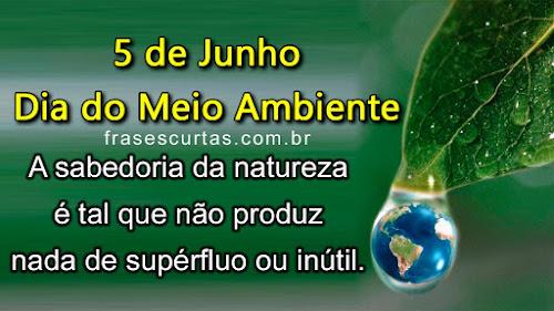 Frases: Dia Mundial do Meio Ambiente