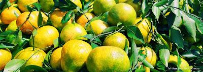 Mandarinas de Veracruz by José Luis Ávila Herrera