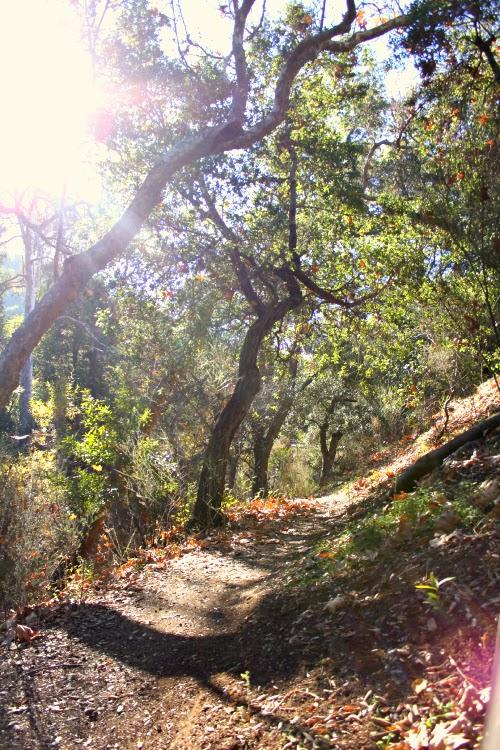 san luis obsipo - woods