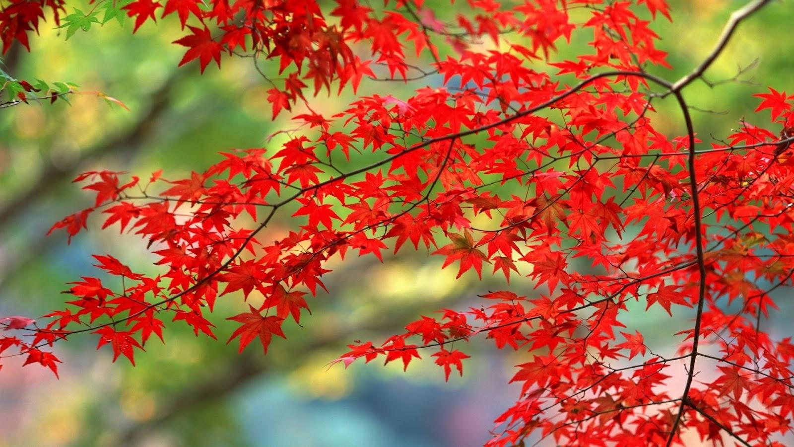http://3.bp.blogspot.com/-YDaPHSK1vrE/T_smt0WfO7I/AAAAAAAAD9s/MSWOuRsCVQo/s1600/Trees-in-autumn-autumn-22174466-1920-1080.jpg