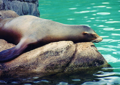 Bronx Zoo new york | review-hours-admission-hotels.