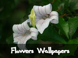 The best flower wallpapers