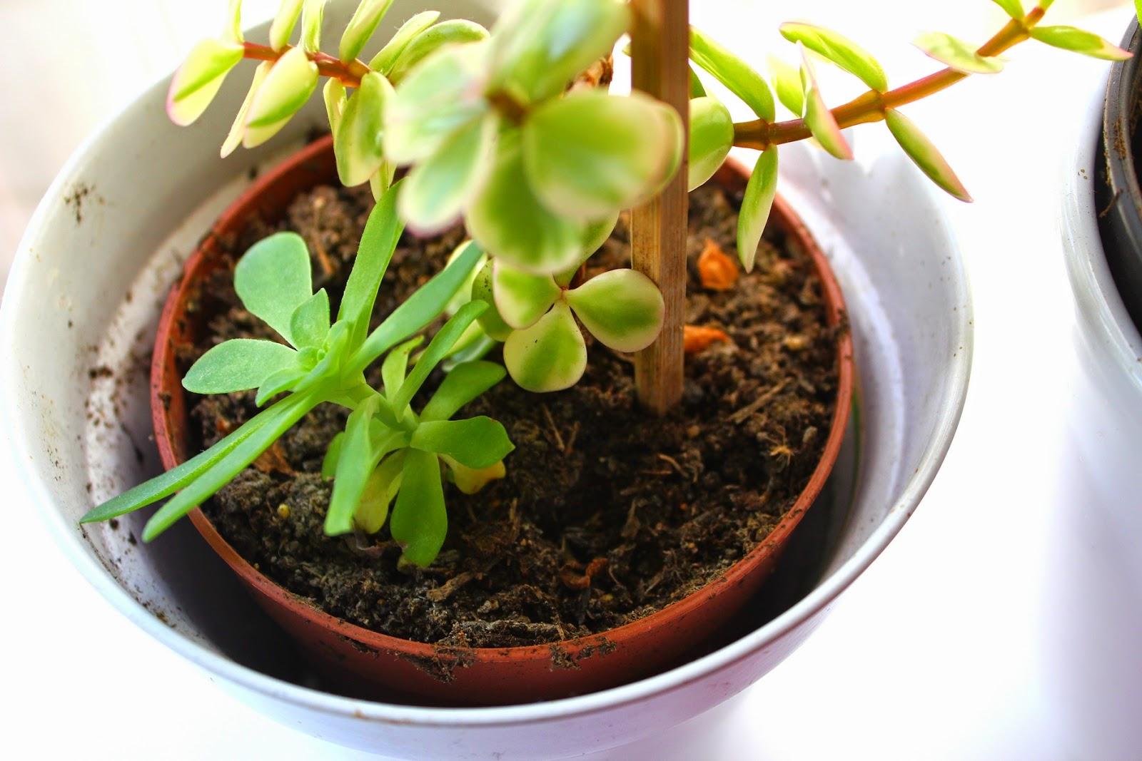 Plantes grasses exterieur photos fashion designs for Plante grasse pour exterieur