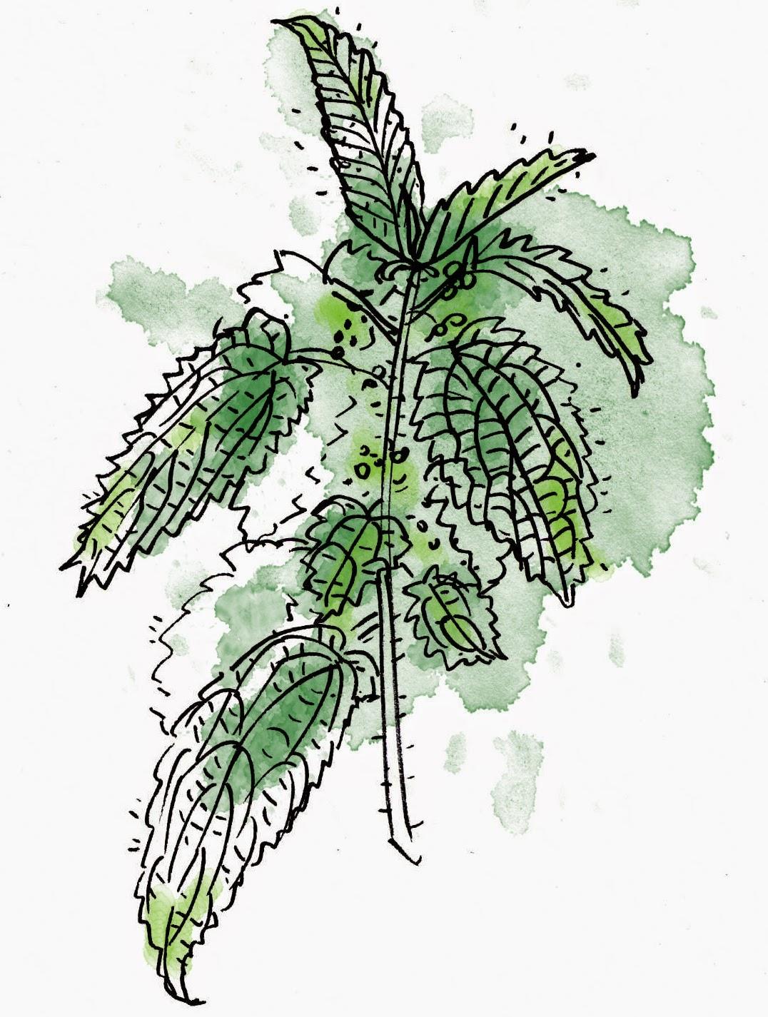 Soupe aux orties pissenlit for Nettoyer feuilles plantes