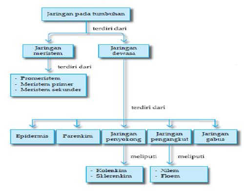 Mozaik impian peta konsep jaringan tumbuhan peta konsep jaringan tumbuhan ccuart Choice Image