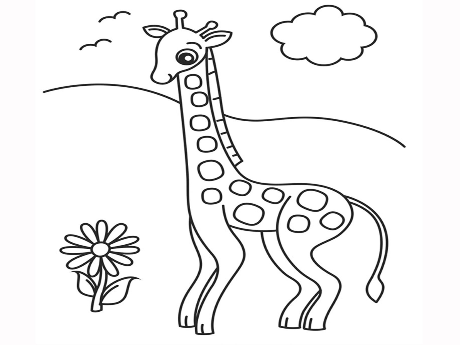 Giraffe descprition and facts for Okapi coloring page