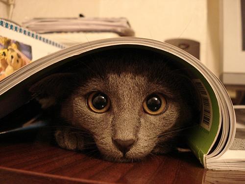 cats hiding