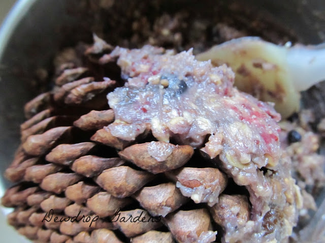 Home Made Suet on Pinecones @DewdropGardens