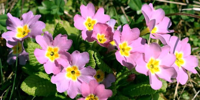 Flore de Alpes