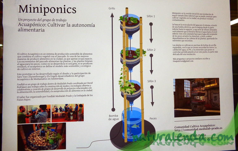 esquema sistema acuaponico