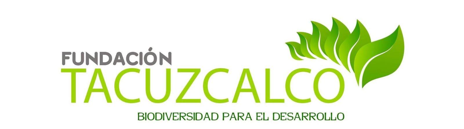 FUNDACION TACUZCALCO