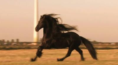 Cavalos Friesians - O Filme