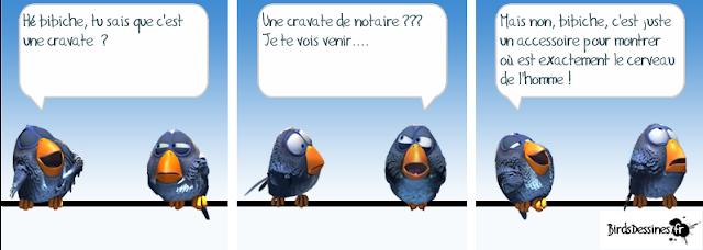 oiseaux blagueurs