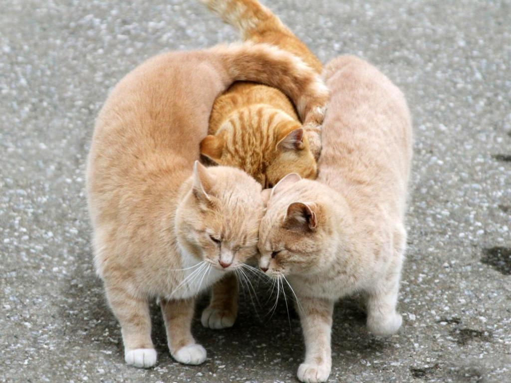 Il topic degli amici - ici - ici Animals_Cats_Affectionate_cat_033702_