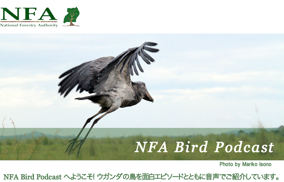 NFA Bird podcast Japanese