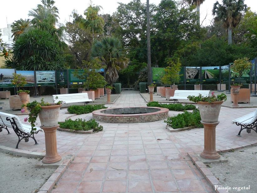 Paisaje vegetal jard n bot nico de valencia ii for Jardin urbano valencia