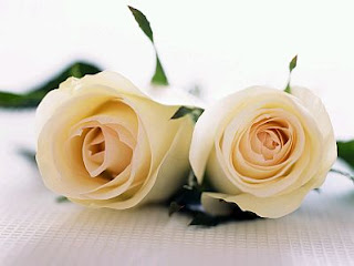 Flores, Fotos de Rosas Blancas, parte 1