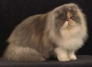 El Pelo de los gatos