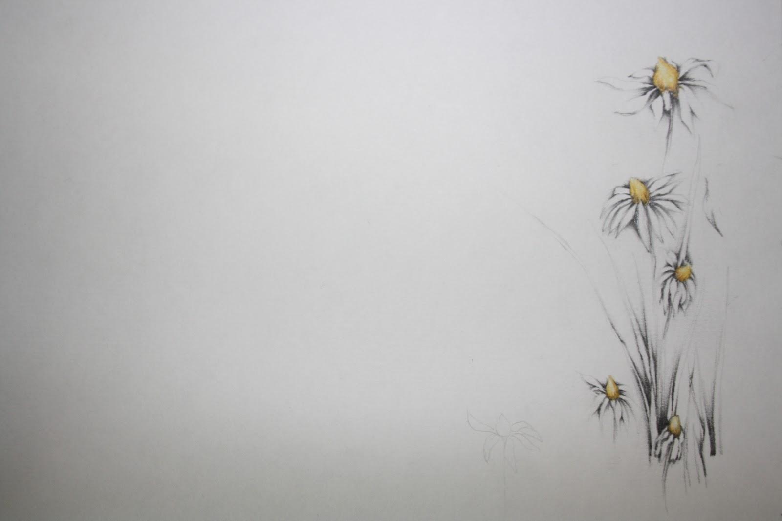 Flowers In Progress Drawings Of My Daisies