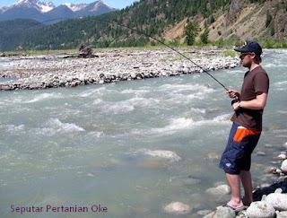 365 Tips Umpan Mancing Jitu Ikan Nila