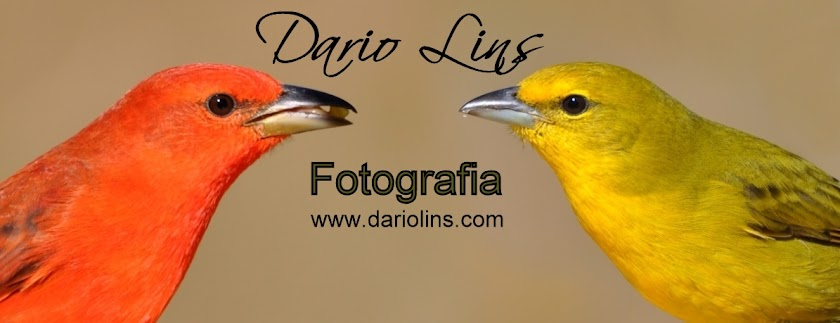 Dario Lins - Fotografia