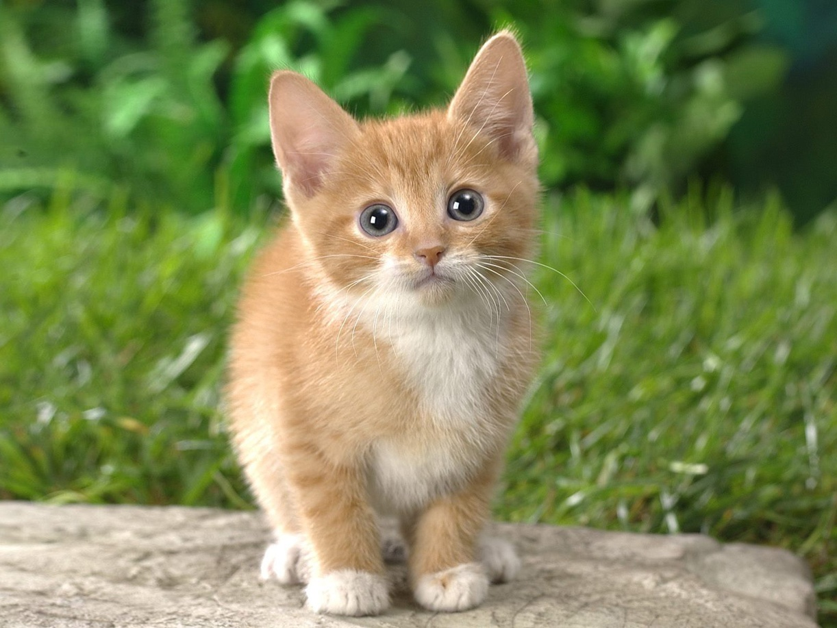 Pictures of Cute Cats Kittens