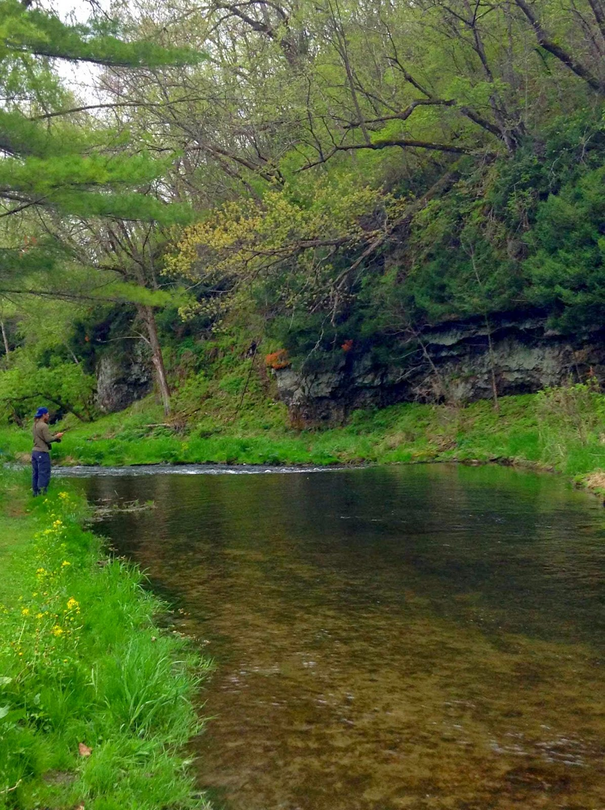 Minnesota driftless fly fishing a creekside stroll for Driftless fly fishing